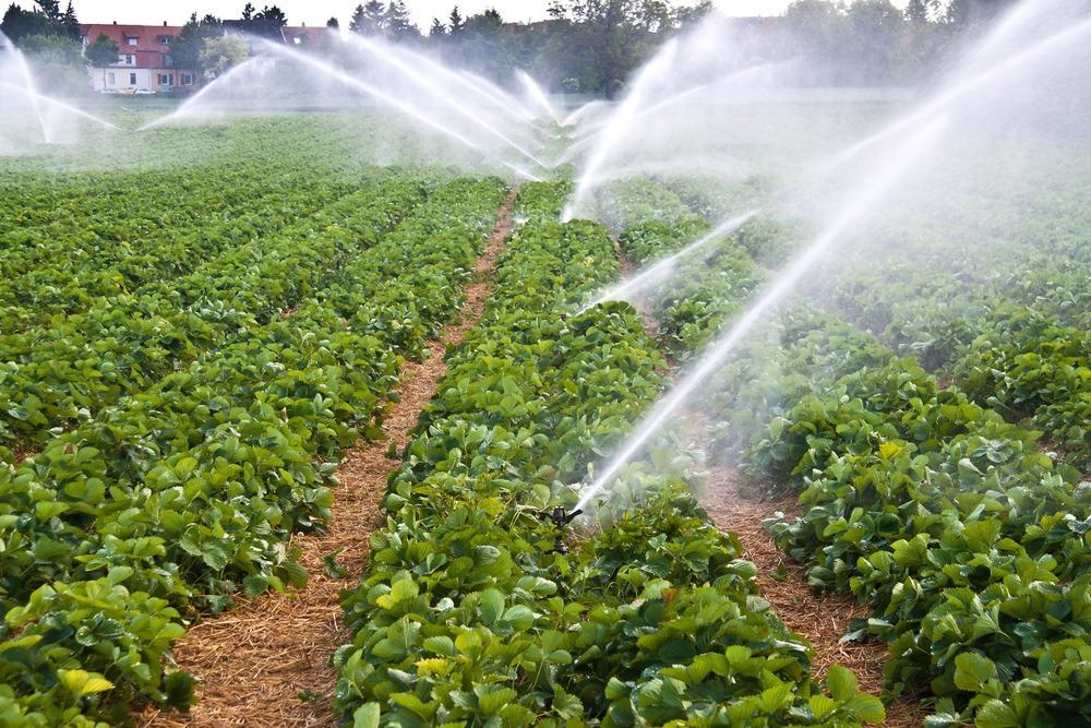 irrigation system agriculture