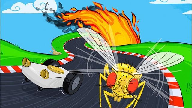 New Study on Fruit Flies may Lead to Better Autonomous Vehicles