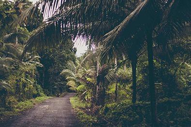 AI,5G,数据科学可以帮助地图野生植物,古代森林在印度尼西亚群岛上