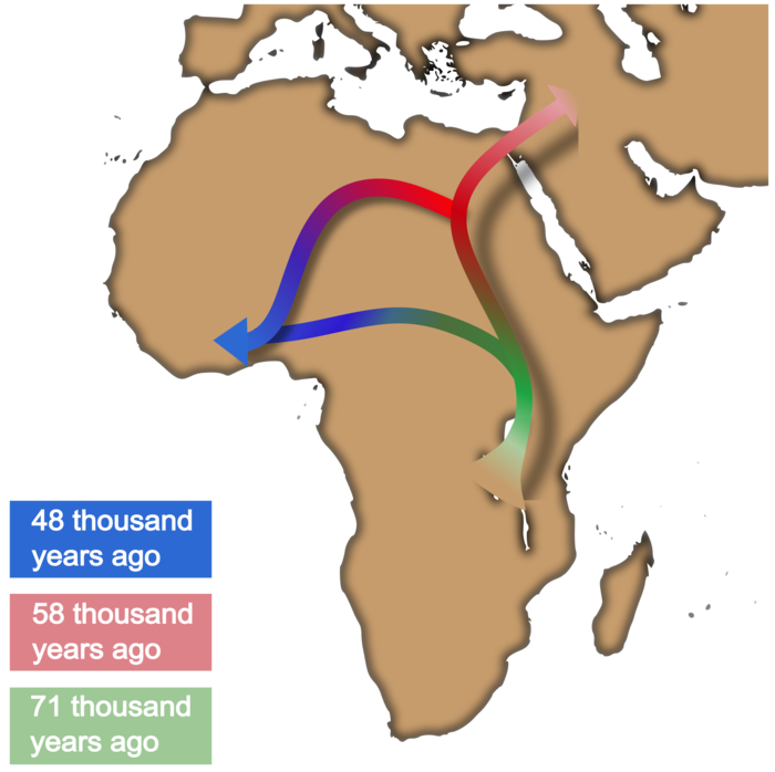 New AI-Based Method Refines Understanding of Out of Africa Movement.