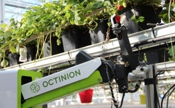 Photonics: Strawberry-Picking Robots to Gather Enough Fruit for Wimbledon in 1 Week