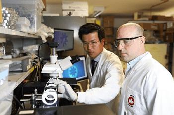 New Method of Manipulating Cells Using Microrobotics