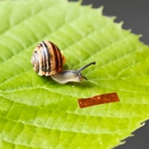 New Millimeter-Scale Soft Snail Robot Driven by Liquid Crystal Elastomer Technology