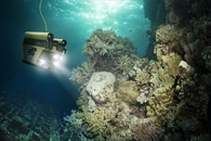 Researchers Develop a Predictive Model and Closed-Loop Controller of Soft Robotic Fish