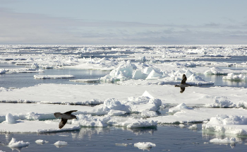 AI to Make Sea Ice Warnings Faster and More Accessible