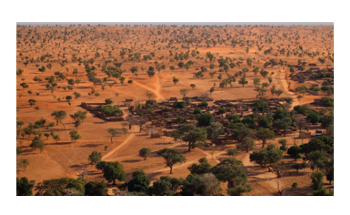 Researchers Use AI, Satellite Imagery to Count Millions of Trees in the Sahara