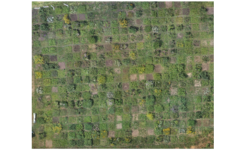 Researchers Use Drone-Based Photogrammetry to Estimate Plant Biomass