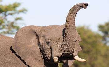 3D Printed Robotic 'Elephant Trunk' is Guided by Machine Learning