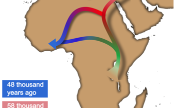 New AI-Based Method Refines Understanding of Out of Africa Movement